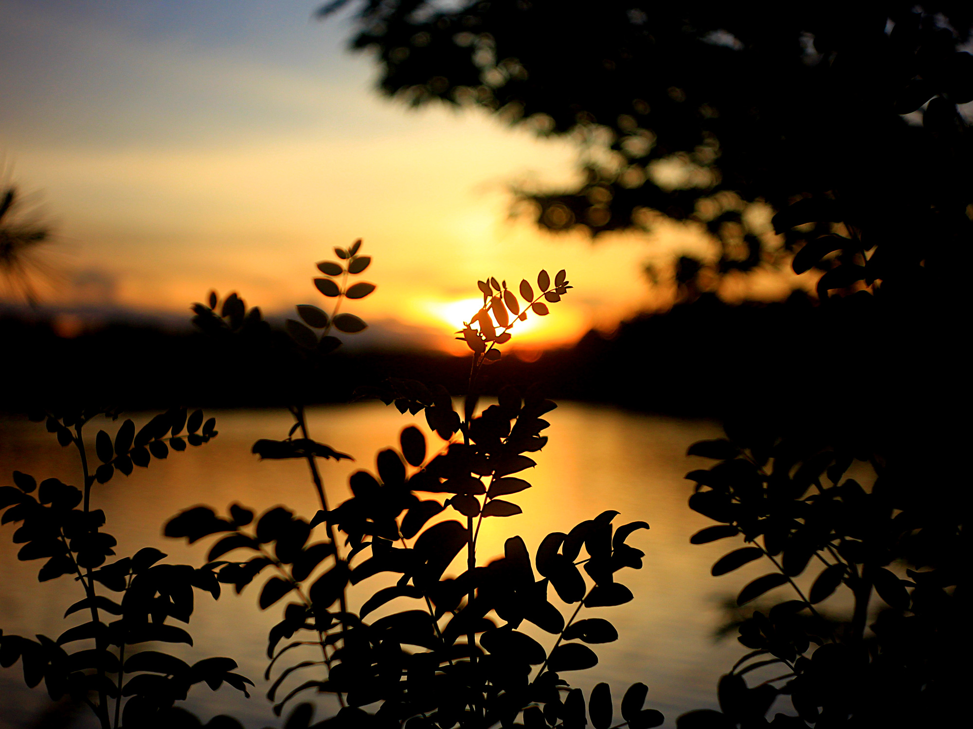 sunset-foliage